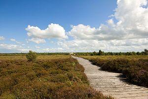 Corlea Trackway - Longford Ireland